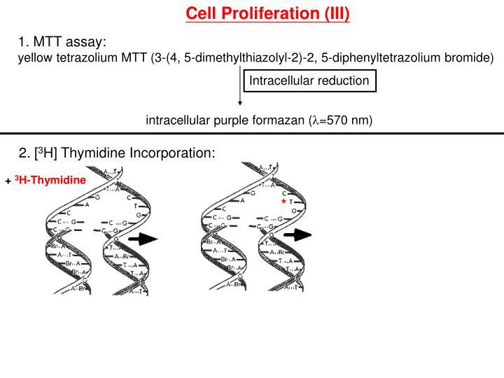 Cell Proliferation (III)