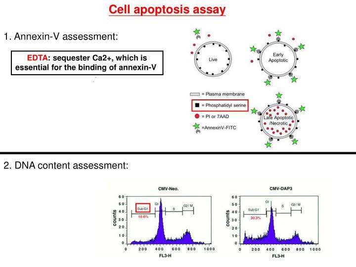 Cell apoptosis assay