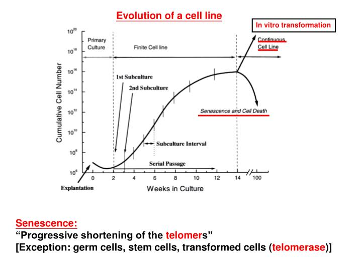 Evolution of a cell line