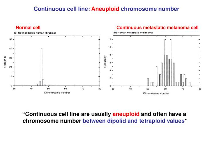 Continuous cell line: