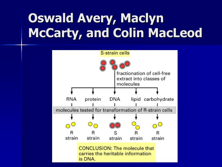 Oswald Avery, Maclyn McCarty, and Colin MacLeod
