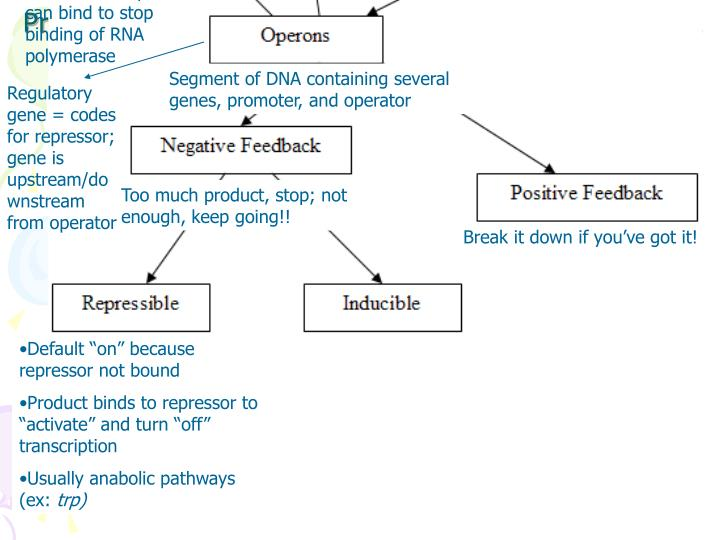 Area where RNA Polymerase binds