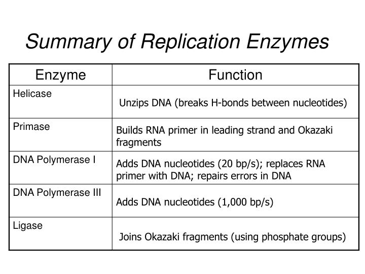 Summary of Replication Enzymes