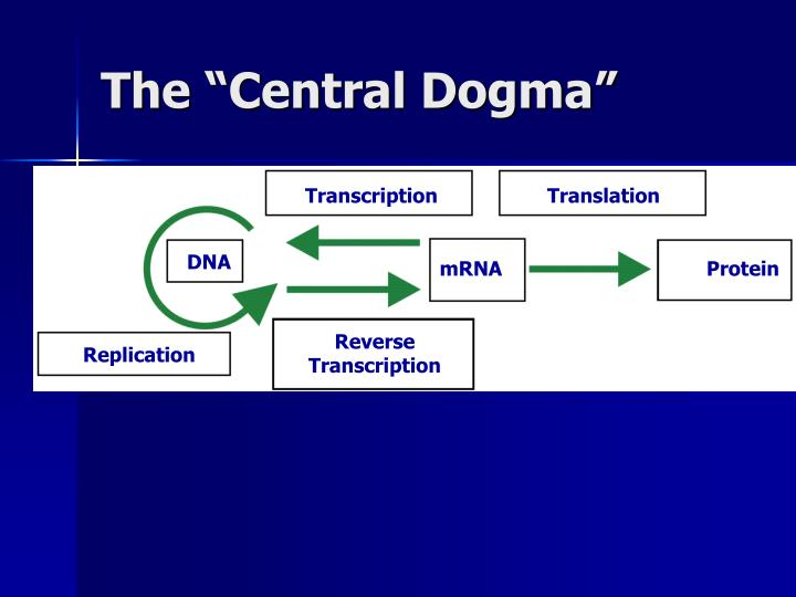 "The ""Central Dogma"""
