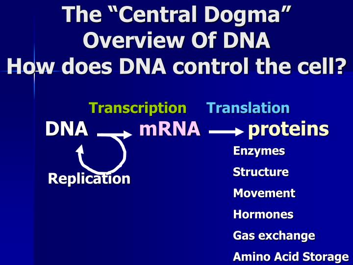 The central dogma overview of dna how does dna control the cell