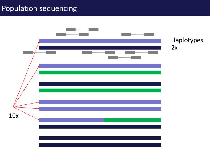 Population sequencing