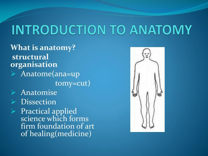Ppt Introduction To Anatomy Powerpoint Presentation Id5599241