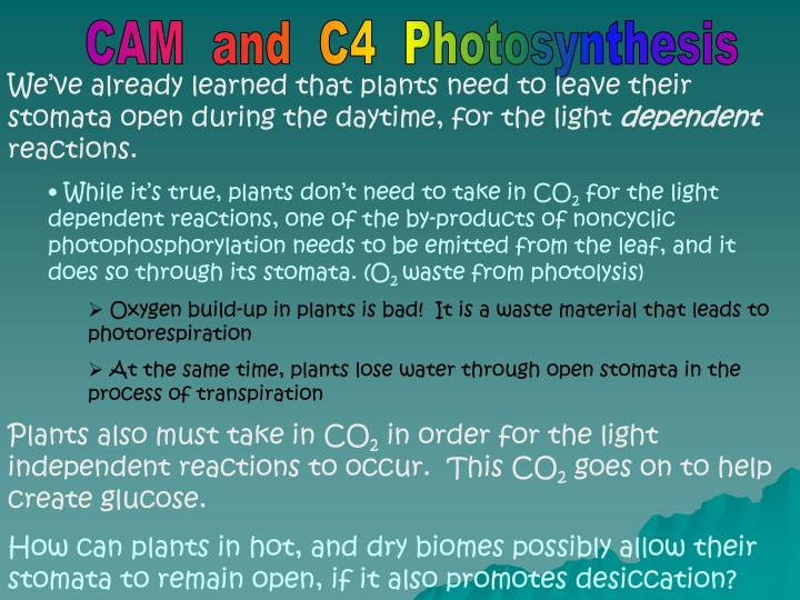 ap biology photosynthesis essay questions answers Photosynthesis and cellular respiration: ap biology the process of photosynthesis is an essential ap biology we have hundreds of ap biology practice questions.