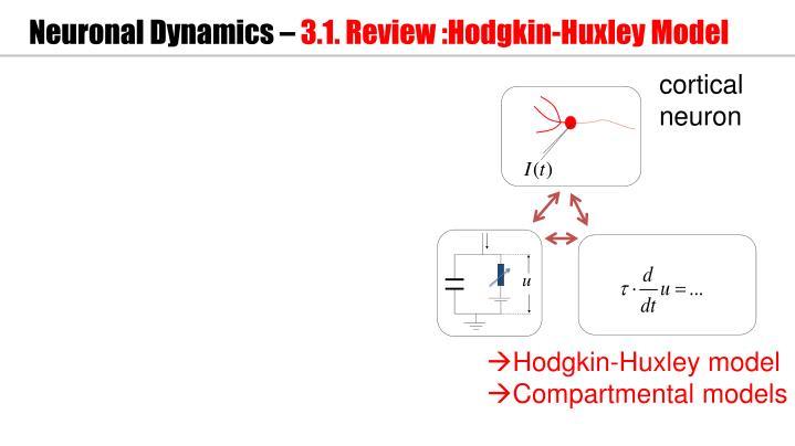 Neuronal dynamics 3 1 review hodgkin huxley model
