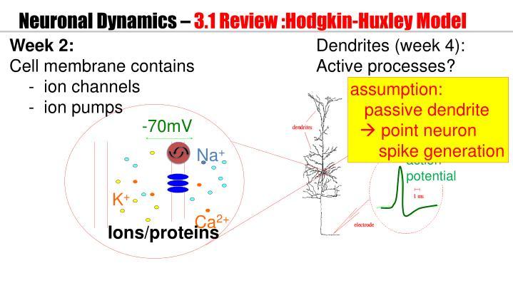 Neuronal dynamics 3 1 review hodgkin huxley model1