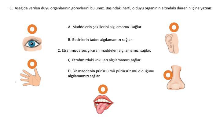 C.  Aşağıda verilen duyu organlarının görevlerini bulunuz. Başındaki harfi, o duyu organının altındaki dairenin içine yazınız.
