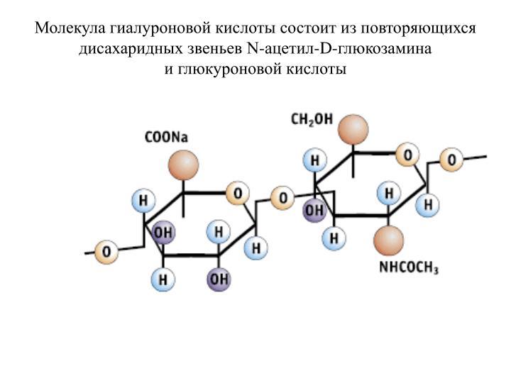 Молекула гиалуроновой кислоты состоит из повторяющихся дисахаридных звеньев N-ацетил-D-глюкозамина иглюкуроновой кислоты