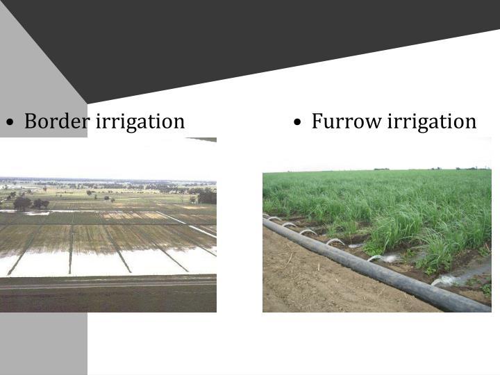 Border irrigation