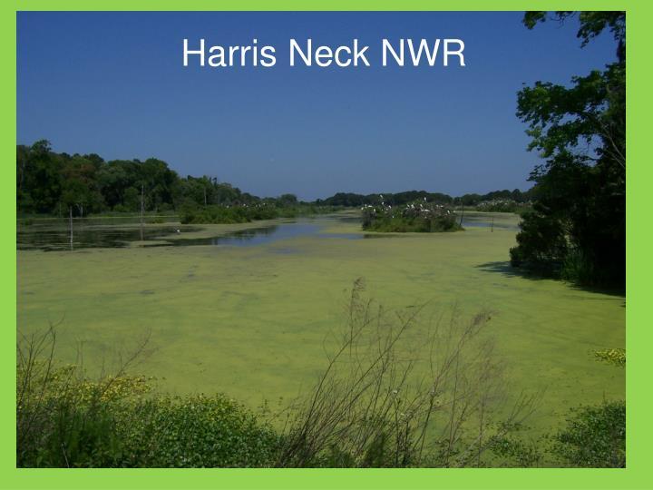 Harris Neck NWR