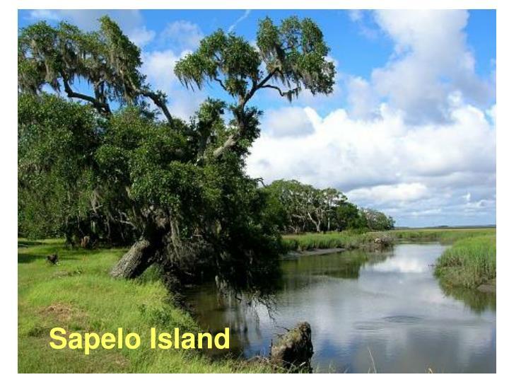 Sapelo Island