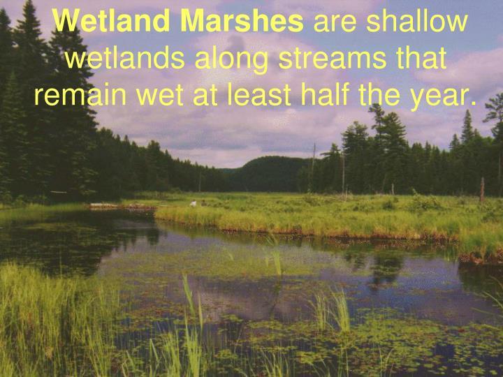 Wetland Marshes