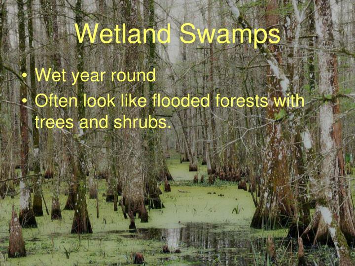 Wetland Swamps