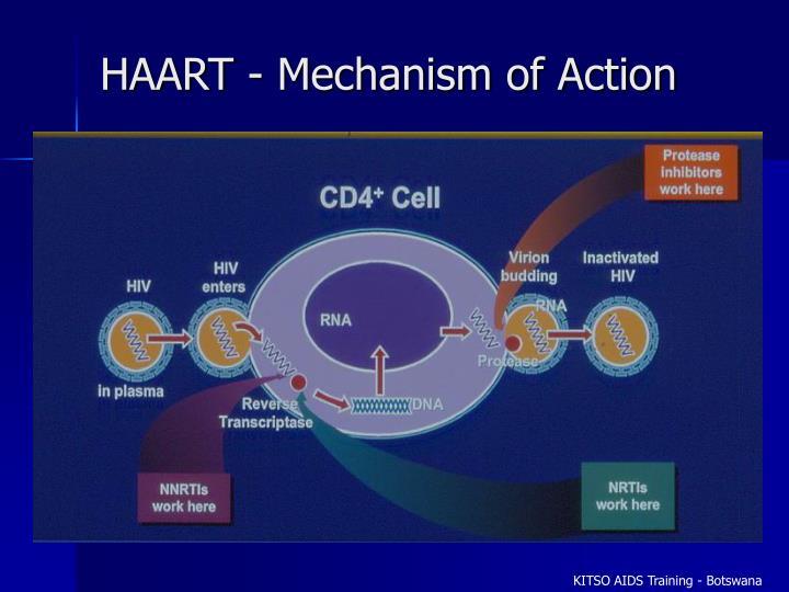 HAART - Mechanism of Action
