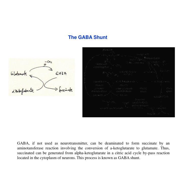 The GABA Shunt