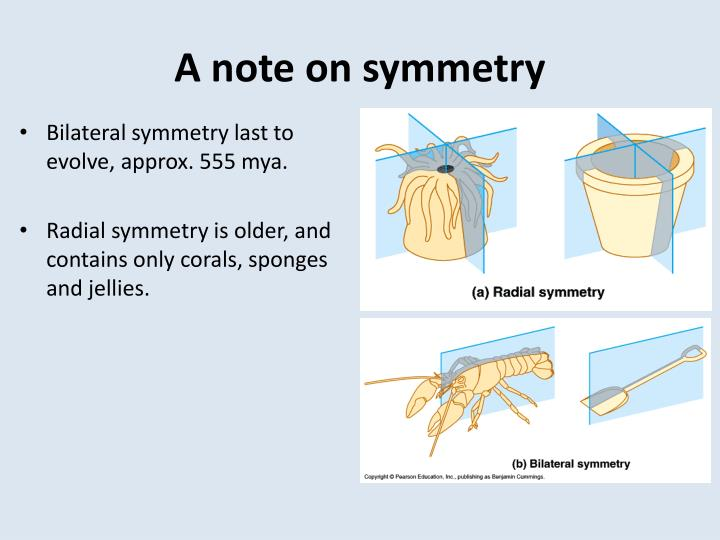 A note on symmetry