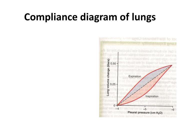 Ppt Minute Respiratory Volume Mrv Powerpoint Presentation Id