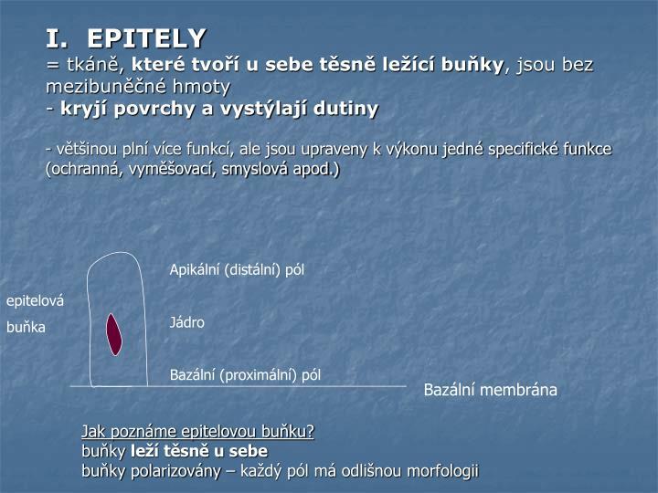 I.  EPITELY