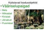 kaitstavad loodusobjektid4
