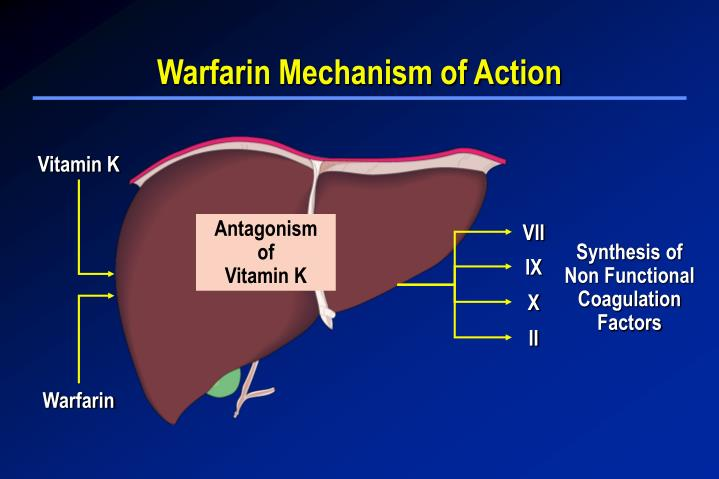 mechanism of action of warfarin biology essay Aspirin is one of the most widely used medical treatments worldwide although isolated from willow bark 100 years ago, it was not until 1971 that the mechanism of action of aspirin was described1 trials involving tens of thousands of patients have since demonstrated that aspirin is effective for the prevention and treatment of heart attack and stroke.