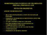 bioremediation pathways of chlorinated phenols phenolics and pentachlorophenol