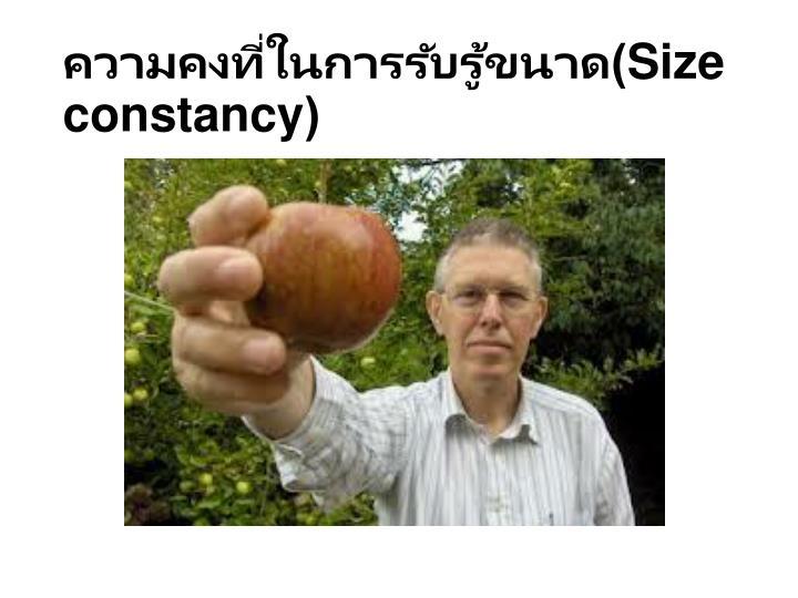 ความคงที่ในการรับรู้ขนาด(
