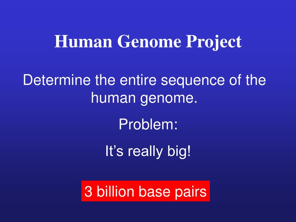 Human Genome Project Powerpoint Ppt Presentation