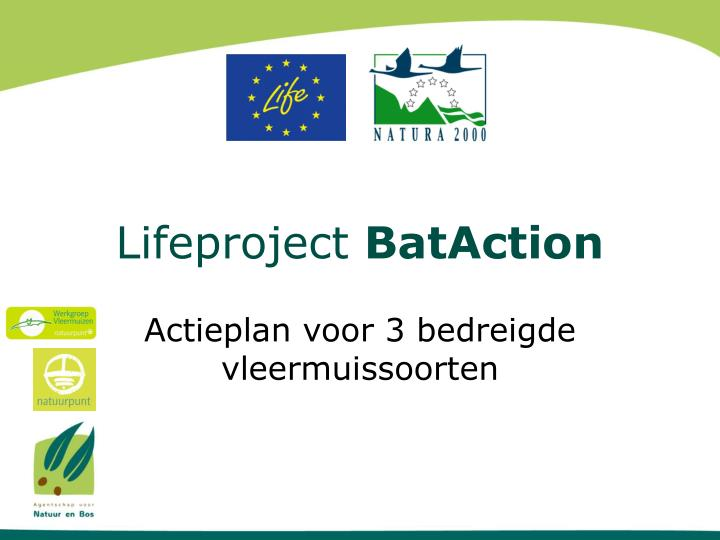 lifeproject bataction n.