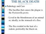 the black death from a history of western society2