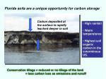 florida soils are a unique opportunity for carbon storage