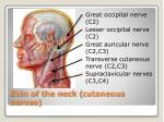 skin of the neck cutaneous nerves