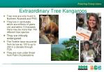 extraordinary tree kangaroos