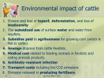 environmental impact of cattle