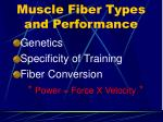 muscle fiber types and performance