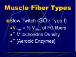 muscle fiber types1