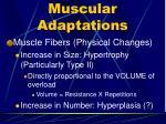 muscular adaptations