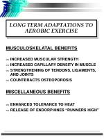 long term adaptations to aerobic exercise1