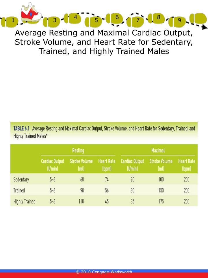 Average Resting and Maximal Cardiac Output, Stroke Volume, and Heart Rate for Sedentary, Trained, and Highly Trained Males