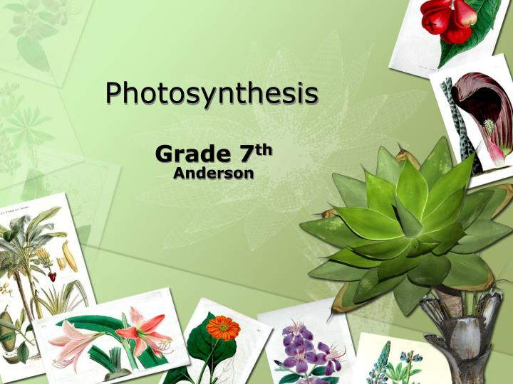 photosynthesis n.