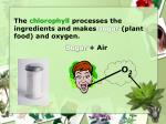 the chlorophyll processes the ingredients and makes sugar plant food and oxygen