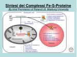 sintesi dei complessi fe s proteine by kind permission of roland lill marburg university