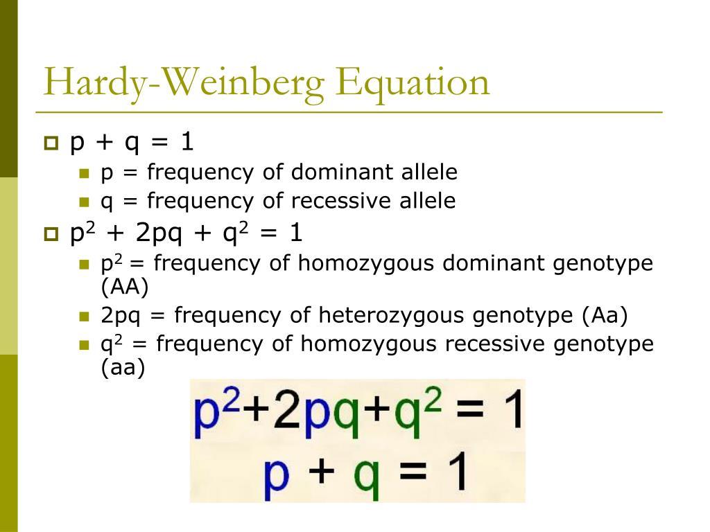 PPT - Hardy-Weinberg Equilibrium PowerPoint Presentation ...