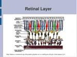 retinal layer