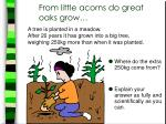 from little acorns do great oaks grow