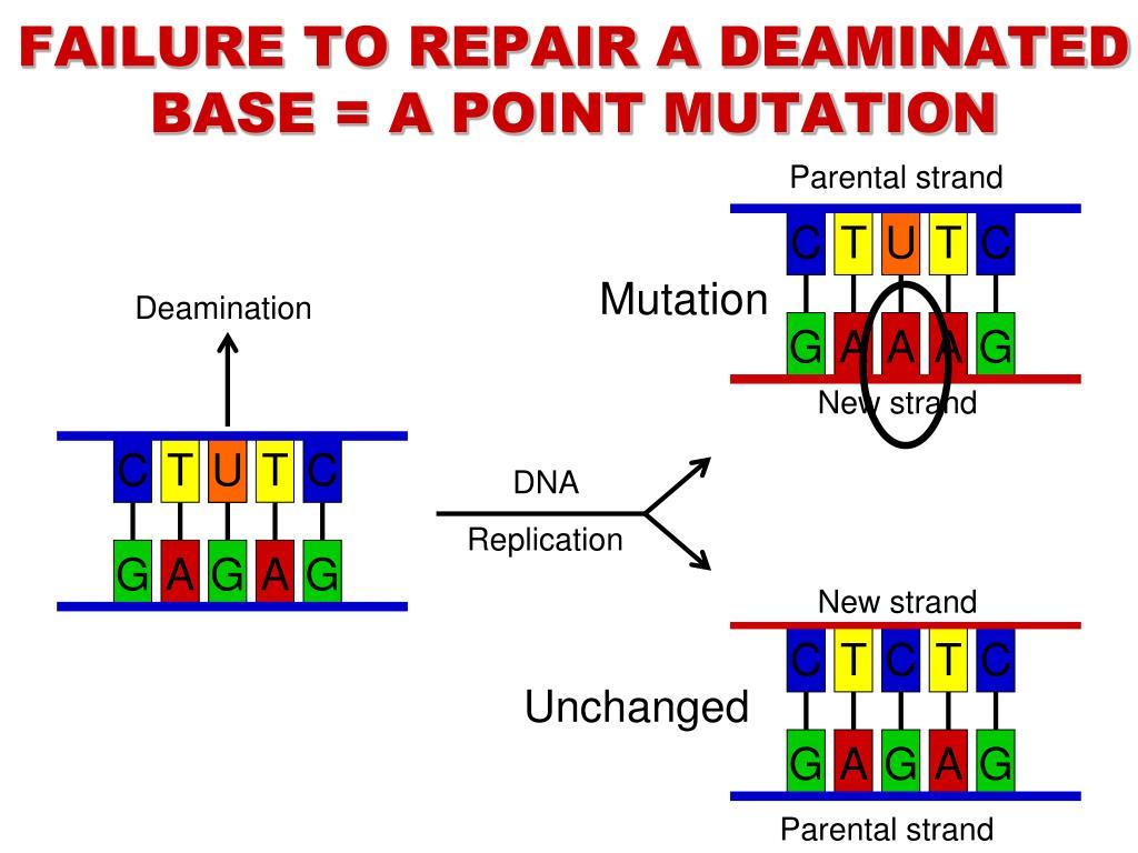 PPT - DNA REPAIR PowerPoint Presentation, free download ...