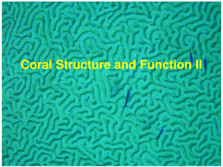 coral structure and function ii n.